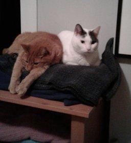 Cat and Gato.jpg